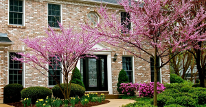 Springtime is beautiful in the South, but you might want to wait to pressure wash your home until after the pollen season is done!