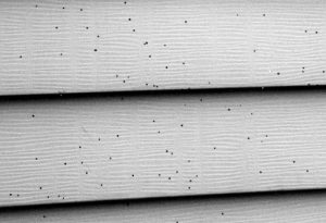 siding covered in artillery fungus